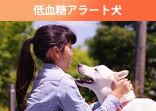 低血糖アラート犬