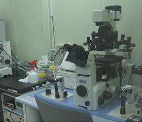 顕微鏡の写真